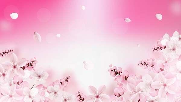 وکتور گل های شکوفه ساکورا صورتی روشن