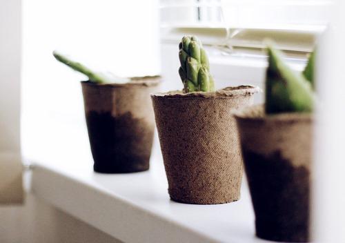 دانلود تصویر باکیفیت گیاه کاکتوس خانگی روی میز ☀️