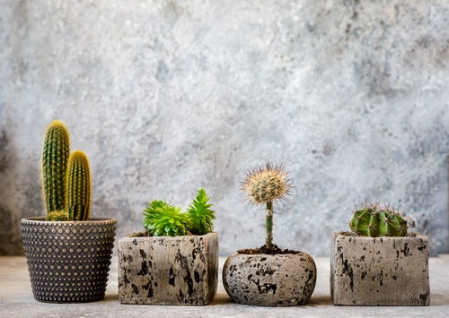 603d448c53ba1 beautiful cactus in pot put on wood table with stay home flora decoration decor idea minimalism20209 - آرمیا دیزاین