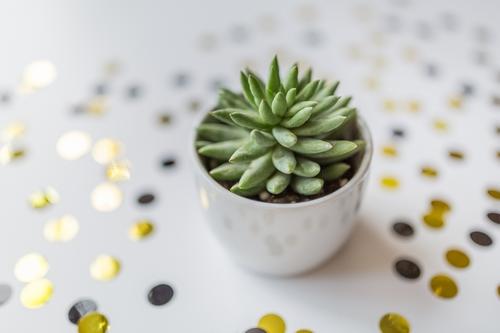 603d53dbb5f4d beautiful cactus in pot put on wood table with stay home flora decoration decor idea minimalism20314 - تصاویر استوک بک گراند باکیفیت