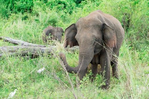 دانلود تصویر باکیفیت فیل 🔥