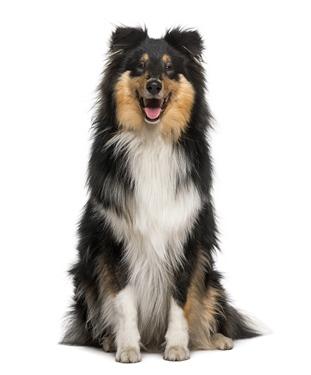 دانلود تصویر باکیفیت سگ 🔥