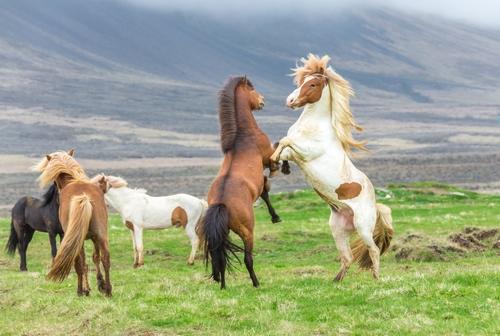 دانلود تصویر باکیفیت اسب 🔥