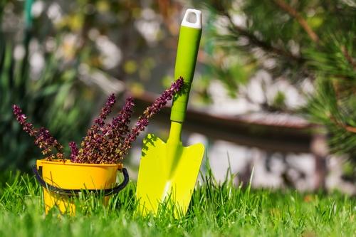6050dc418c39d gardening tools and floriculture2066 - تصاویر استوک بک گراند باکیفیت