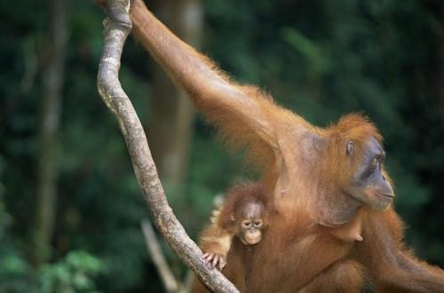 دانلود تصویر با کیفیت حیوانات جنگل 🔥